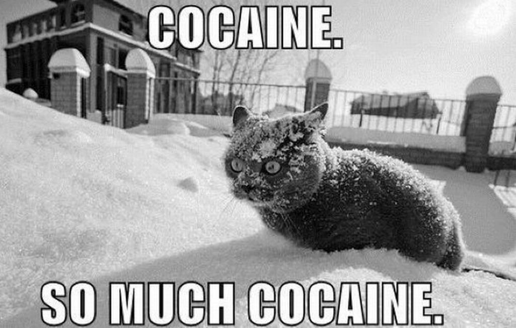 somuchcocaine.jpg
